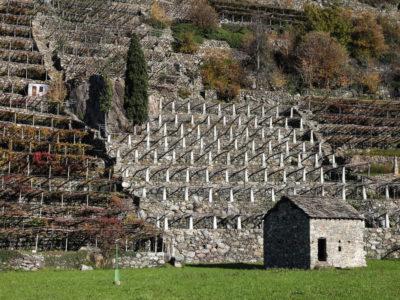 VALLE D'AOSTA - Vigneti di Pont-Saint-Martin (foto Enrico Romanzi)